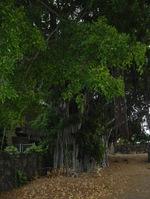 Hawaii_054