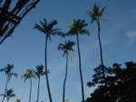 Hawaii_198