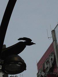 Photo2_059