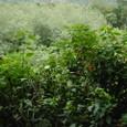 一面の植物