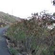 マカプウ岬への道