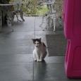 Aloha Theatherの猫