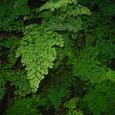 ジャングル・ツアーの植物