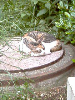 山下町公園の猫